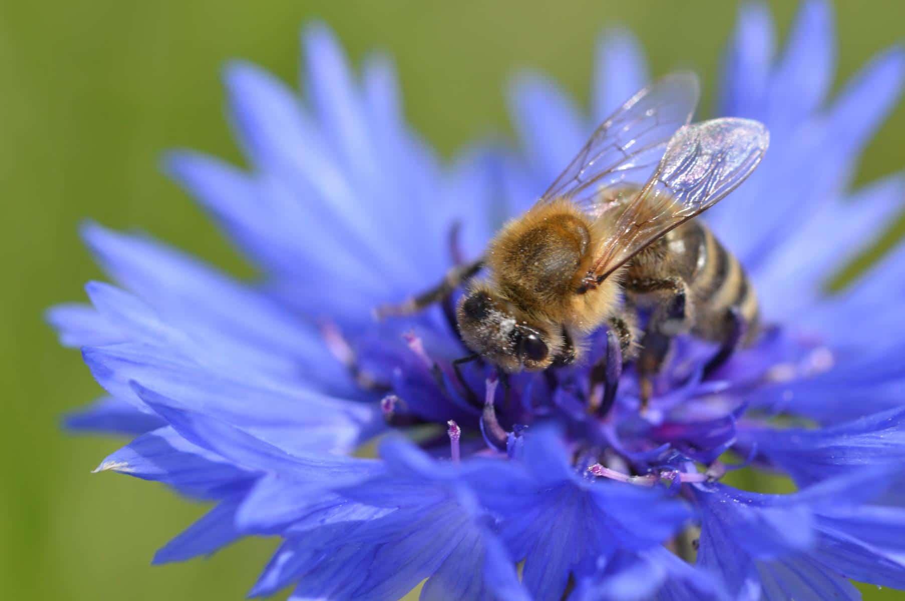 Vorbereitung auf Ablauf der Bienenstock Lufttherapie