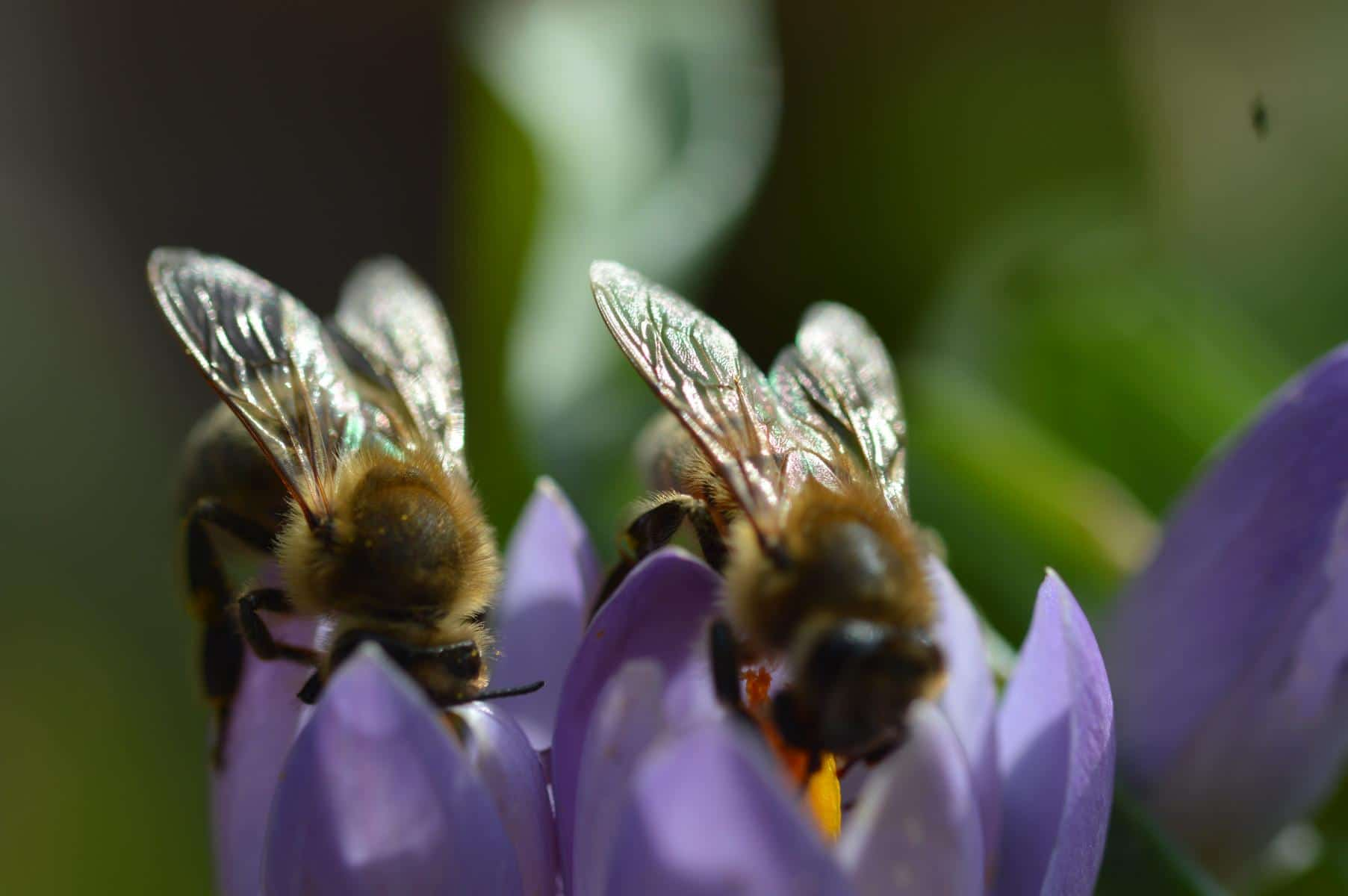 Ätherischen Öle und Flavonoide in der Luft aus dem Bienenstock